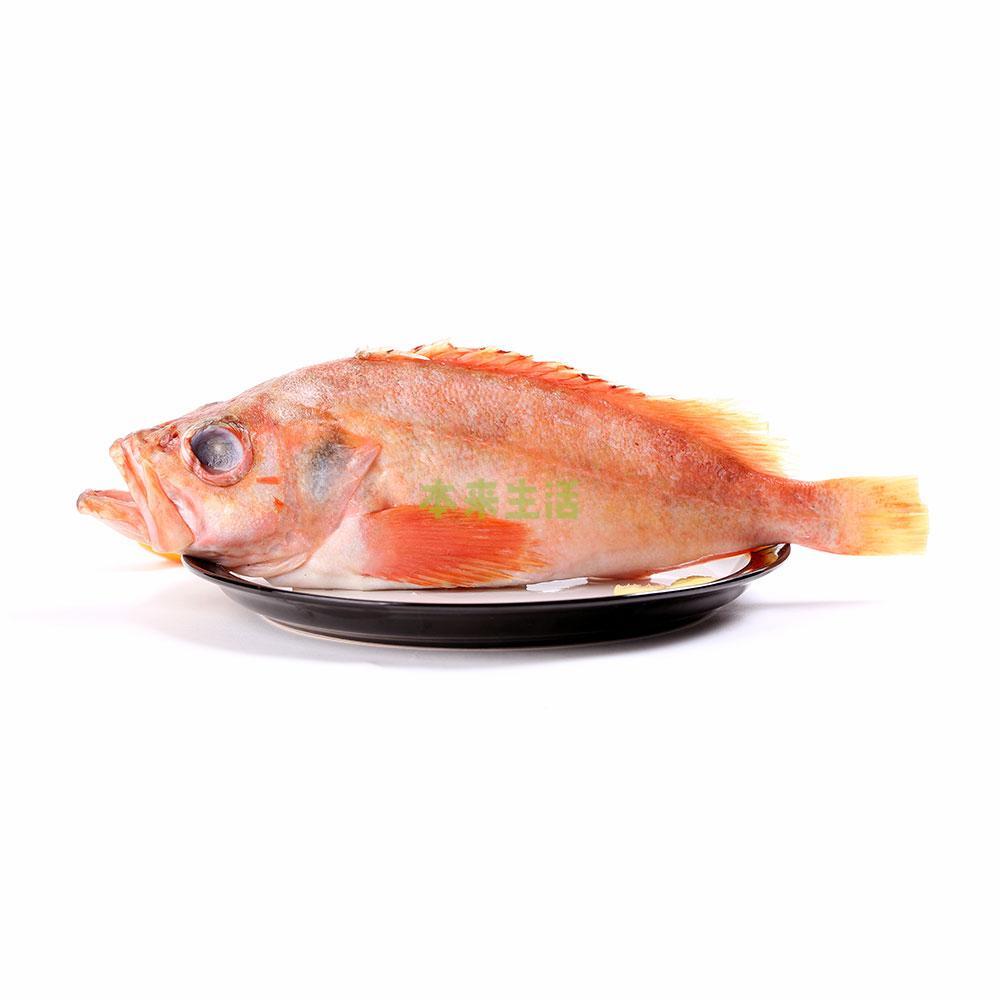 【冰岛红石斑鱼 500g/袋(1条)纯净冰岛深海