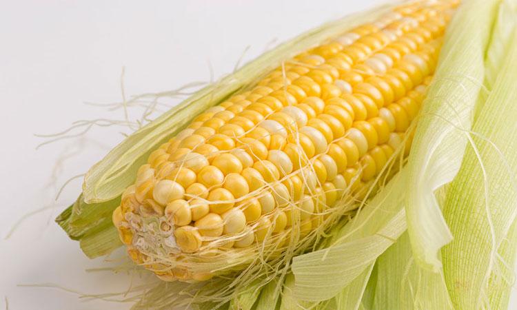 水果玉米_水果玉米是一种新兴休闲营养食品,含维生素a,b1,b2,c,矿物质等